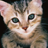 kitty_in_a_box userpic