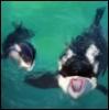 solos_orca