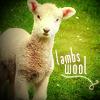 Lambs-Wool