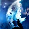Kris - wolf