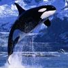 Susan: Orca