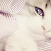 Miriamele: Beautiful Cat