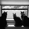 windowcats - all three