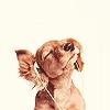 amy: Musical dog