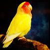 Leonie: yellow parrot