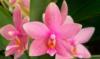 orchideakat