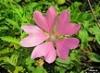 Цветок удачи