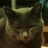 theproboscis userpic
