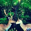 pinnipedia: Deer!