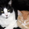 cats, Louis, Kobayashimaru