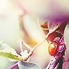 Kristin: Spring » Ladybug Flowers