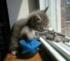 Machine gun kitten