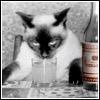 Концептуальное пьянство