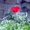 chayiana userpic
