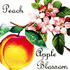 velvetwhip: Peach & Apple Blossom
