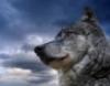 wolf_thunder userpic