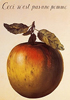 selva oscura: [magritte] it's not an apple