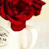 stock; rose.