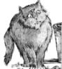 кот карапетяна