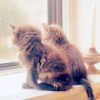 window, kitties, love ya, cute