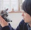 sho cat