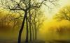 fog_dancer