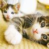cat icon by cifan70