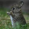 RaTs: Lone Bunny