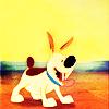 Huma Rashid: mulans dog