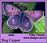 purplejam userpic