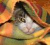 подпледник-бедуин