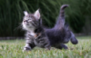 nastyacat userpic
