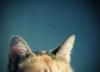 master_mur userpic