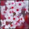 37208 userpic