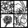 Gender's Flowers
