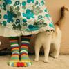 кошка у ног