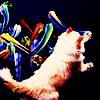 cat does paint