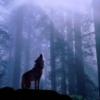 wolfstarblade userpic
