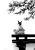 кот медитация