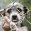 Проект о приютах для бездомных животных