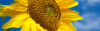 secretidalias userpic