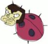 Disgruntled ladybug