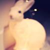 lapin_petite