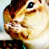 Kellie: Animal - chipmunk||omnom