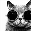 cherubic_x: Cat-n-Shades