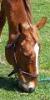equestriangal85 userpic