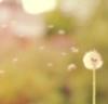 Клубничное Настроение (Strawberry Mood)