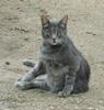 catzchen userpic