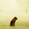 wolf - dog alone [sad].