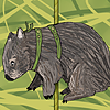 Merry-Go-Round Wombat